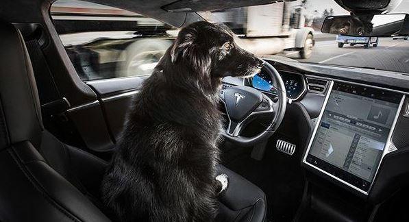 Tesla Love's the Dogs.