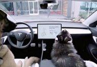 Tesla's Dog Mode, New Update by Tesla